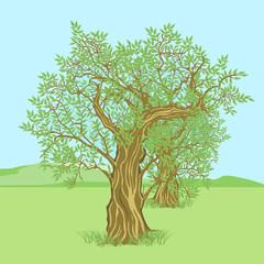 Olivenbaum in der Landschaft