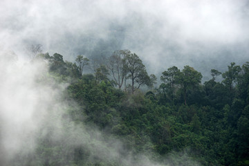 rain forest in fog