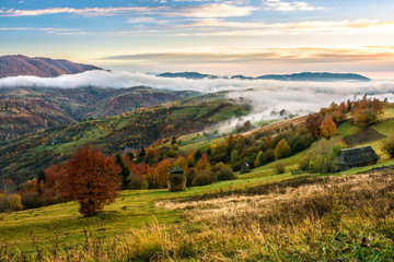 cold morning fog with golden hot sunrise in the rural area of Carpathian mountain range. green grass and trees with colorful foliage on the hillside meadow