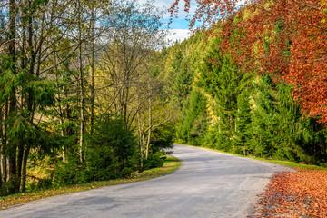 asphalt road through the forest on sunny autumn day