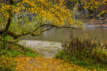 Mountain river flows among the stones through autumn forest with yellow foliage on the shore