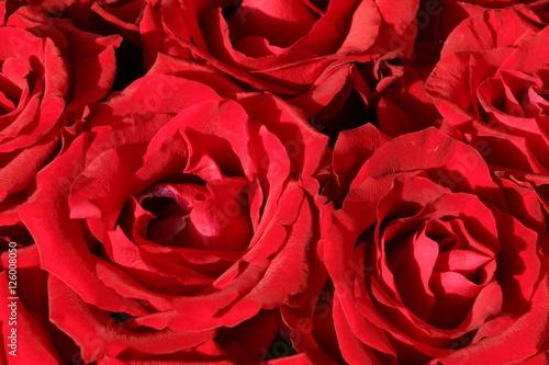 red roses rote rosen stockfotos und lizenzfreie bilder auf bild 126008050. Black Bedroom Furniture Sets. Home Design Ideas