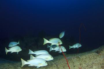 Fish school underwater on coral reef