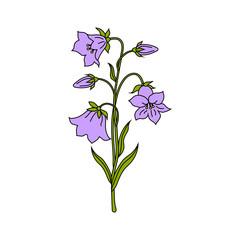 Vector illustration of bell flowers
