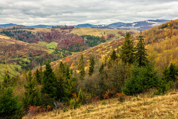 autumn slope of mountain range with spruce forest under cloudy sky