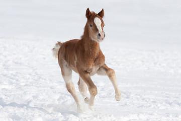 Nice foal running