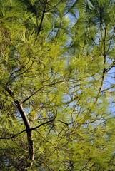 alberi e rami d'autunno