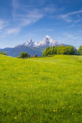 Fototapete - Idyllic landscape in the Alps with blooming meadows in summer