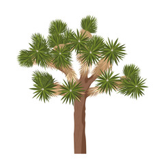 Joshua tree - isolated on white background. Yucca brevifolia vector