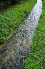 fresh water stream in the nature / bright green grass and clear rill