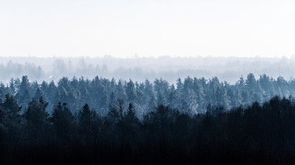 Vast forest in the fog. Landscape.