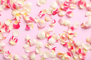 Rose petals on a pink background