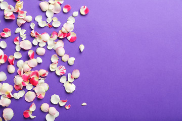 Rose petals on a purple background