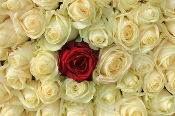 Red rose in white bouquet