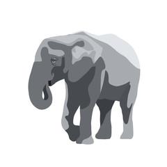 Elephant isolated vector illustration, wild large animal