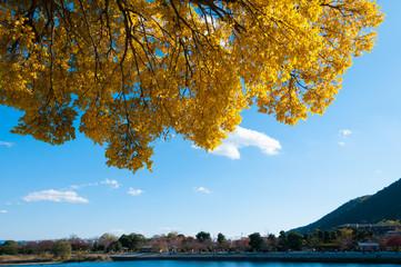 京都嵐山黄葉