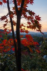 京都東山 夕焼けに紅葉