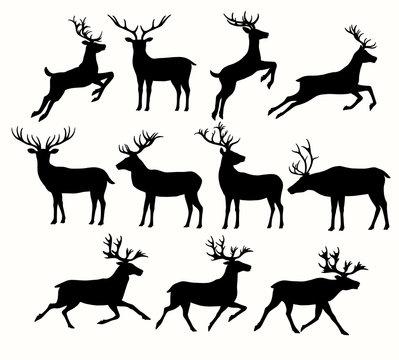 Silhouettes of Deers