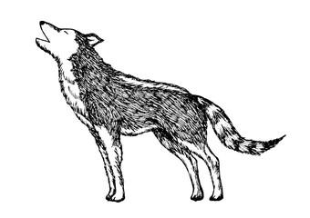 wolf howling hand drawn vector illustration design cartoon