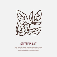 Vector line icon of coffee tree. Coffee plant linear logo. Outline symbol for cafe, bar, shop. Coffeemaking design element for sites.