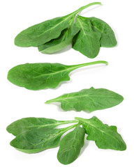Green spinach leaves on a white background