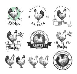 Chicken product logotypes set. Hen meat and eggs vintage produce elements. Badges and design elements for the chicken manufacturing. Vector illustration.