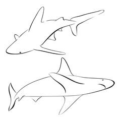 vector sharks drawn in line art style