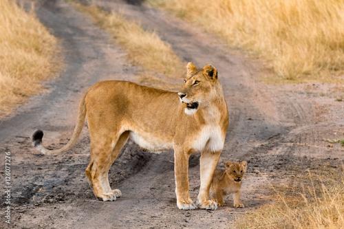 Female lion with cubs in Masai Mara, Kenya