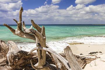 Strandgut Isla Catalina