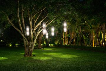 tree with lamp lighting Fotomurales