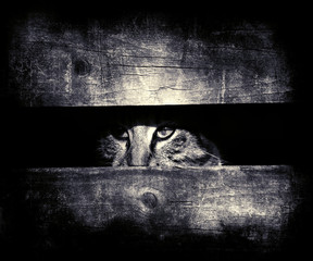 Beautiful photo of cat looking out of wooden board. Vintage grunge wallpaper
