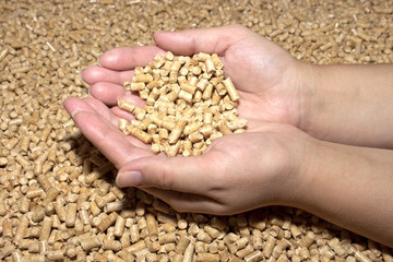 Biofuels. Wood pellets in female hands . The cat litter.