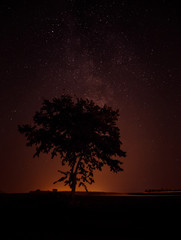 The Milky Way above a lone tree