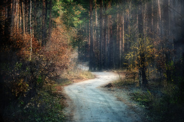 dirt road through a dark mysterious forest, a small haze and the light streaming through the trees.  pine forest. The atmosphere of mystery.