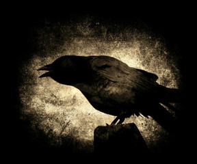 Grunge Wallpaper, Scary Halloween Crow