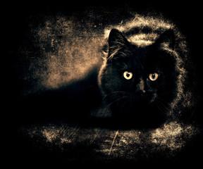 Beautiful dark grunge wallpaper, gorgeous vintage photo of black cat