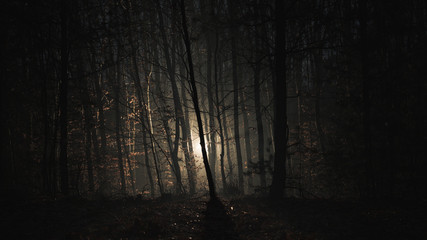 Dark forest night with scary light behind