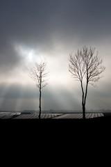 dwa samotne drzewa na tle nieba 1