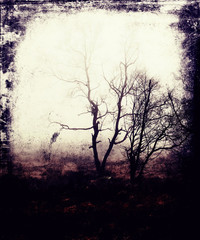 Vintage Photo With Scary Tree