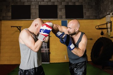 Two boxer practicing boxing in fitness studio