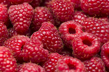 Freshly picked raspberry, many ripe sweet red fruits, closeup, healthy food, natural background