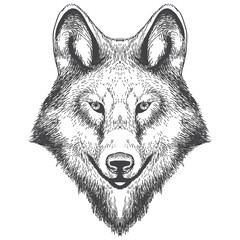 Illustration of wolf head hand drawning. Vector illustration