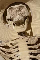 Close up of Skeleton skull in wide brimmed hat