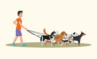 Man walking many dogs of different breeds. Vector illustration of dog walker
