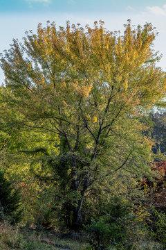 Tree in Manassas Va