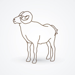 Sheep with big horn standing outline graphic vector.