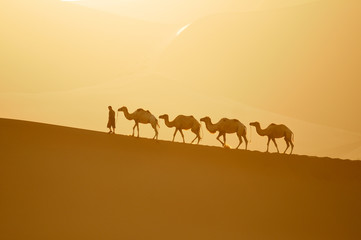 camel, camel and cameleer at sunset
