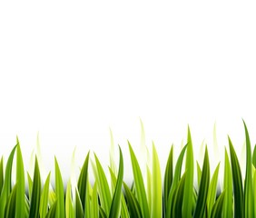 Grass over white background for you design