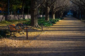 明治神宮外苑銀杏並木 冬