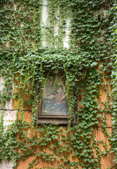 Facade with religious picture covered with green ivy. Rome. Italy